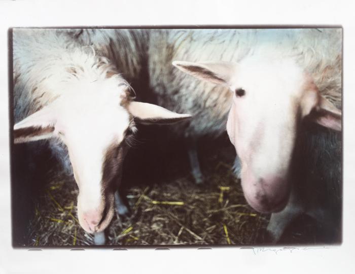 Altre-due-Pecore