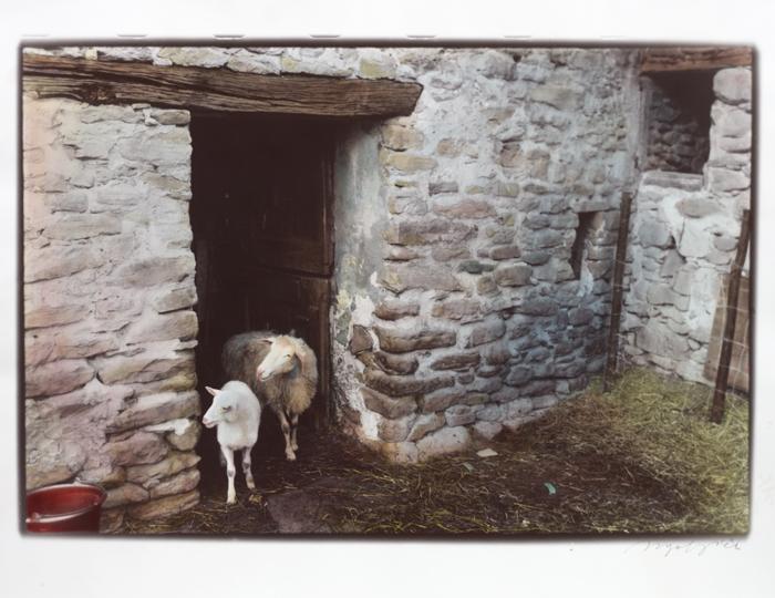 La-casa-delle-pecore
