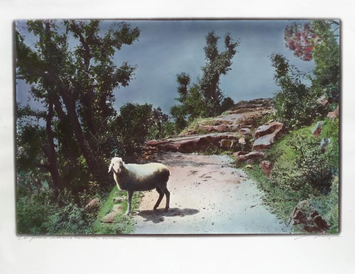 Le-Pecore-indiane-hanno-3-zampe