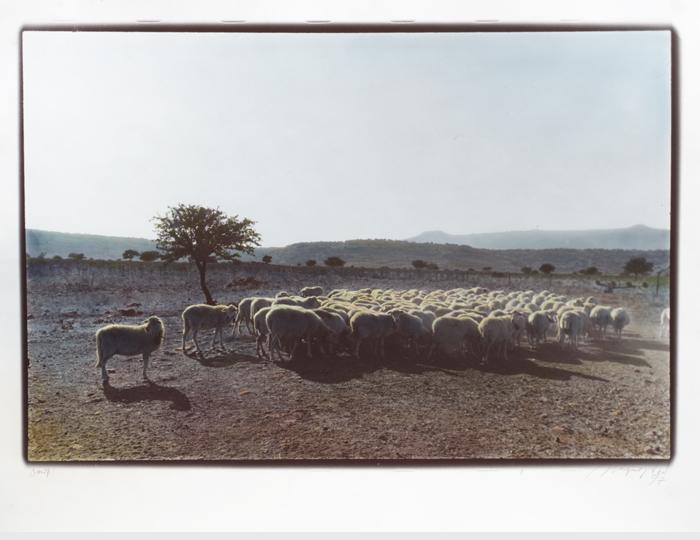 Tante-Pecore